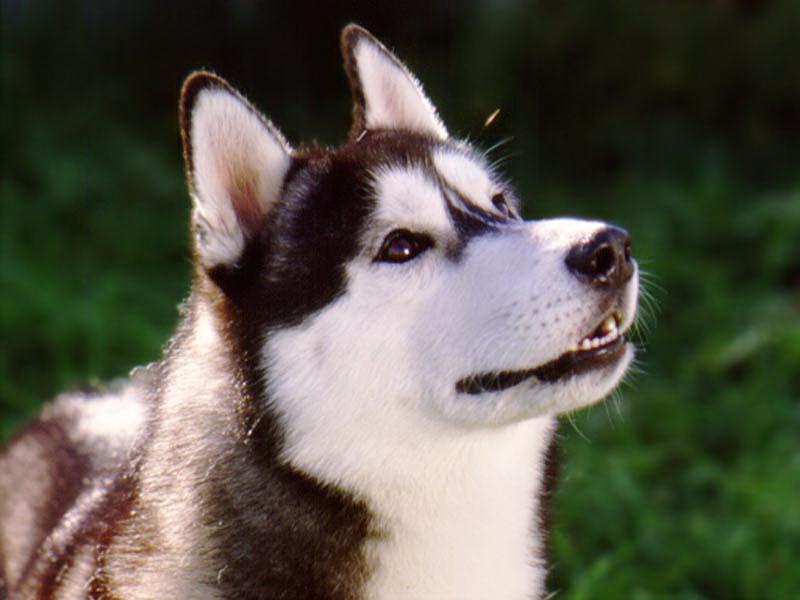 собака1.jpg